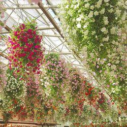 花と鳥の楽園in松江フォーゲルパーク*