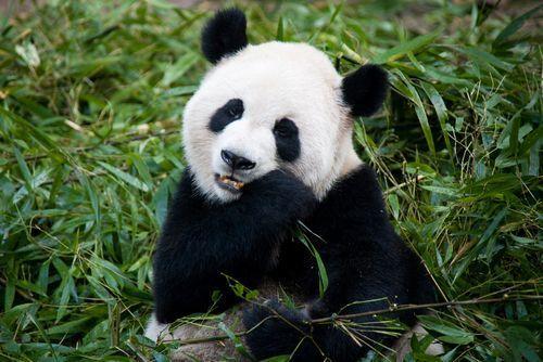 冬だからこそ【動物園デート】に!心も体も温まる動物園に行こう♡の2枚目の画像