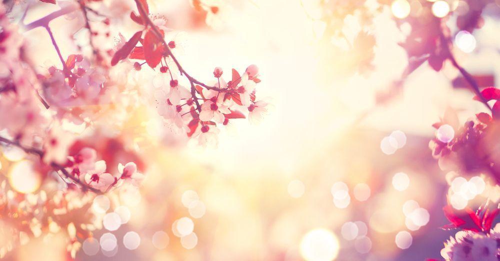 """パーソナルカラーが""""春""""の人必見!似合わせヘアカラーを紹介♡の2枚目の画像"""