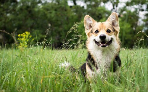 思わず抱き寄せたい!かわいい《犬系女子》の特徴と行動パターン♡の13枚目の画像