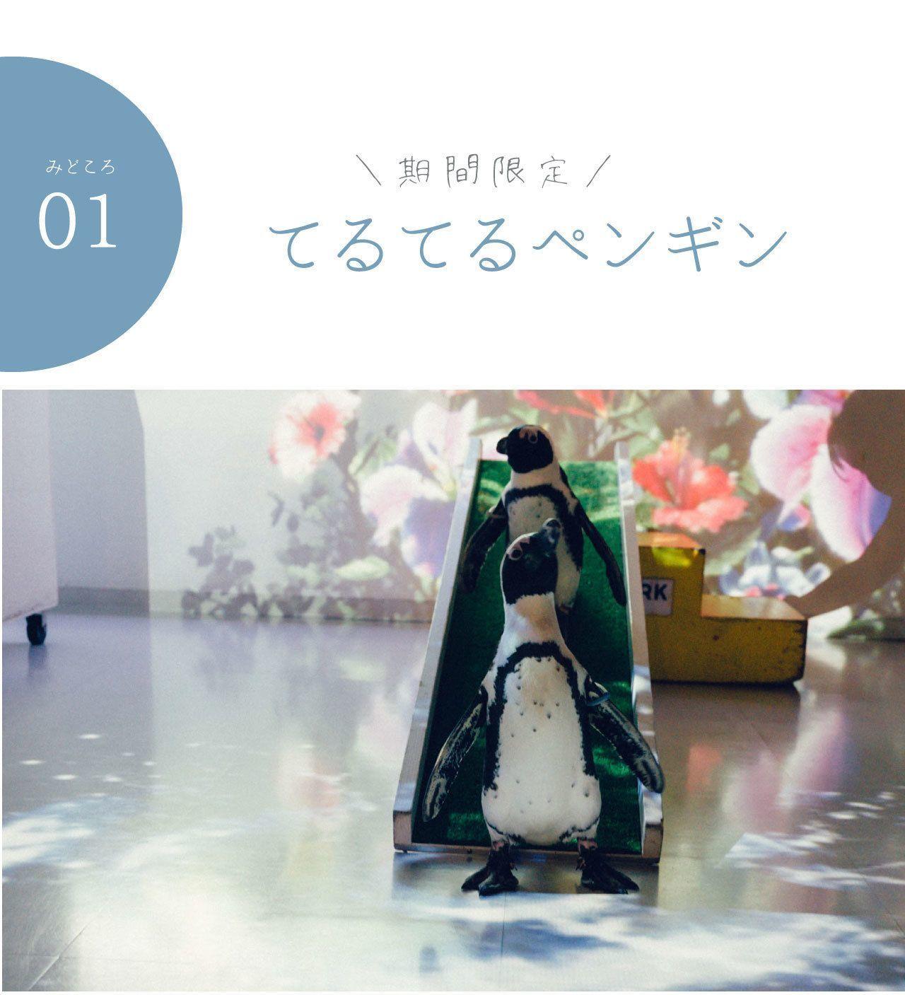 6:00pmに待ち合わせ。今日の主役は、彼と私と、時々、ペンギンの4枚目の画像