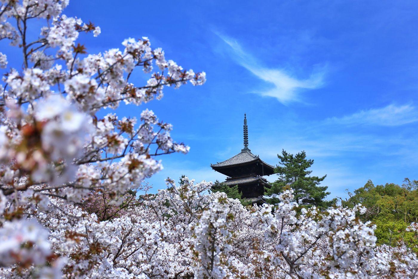 女子旅は人気の観光スポットへ!和を感じられる京都旅行特集の2枚目の画像